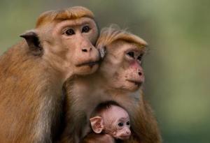 Movie Review: 'Monkey Kingdom'